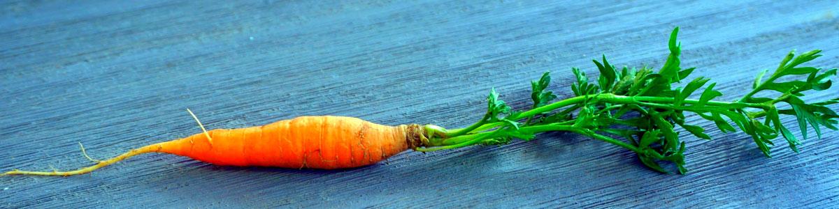 mito-vision-zanahoria